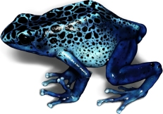 "Digital illustration of Dendrobates ""azureus"", a poison dart frog."