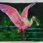 Platalea ajaja - Roseate Spoonbill - Acrylics, Gouache - 2014 Subject was painted from a reference photo found via Google images. I'd love to shoot the species in it's habitat to get my own references!