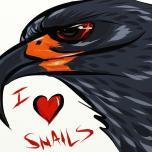 Snail Kite (Rostrhamus sociabilis) Digital