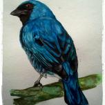 Tersina viridis (Swallow Tanager) Traditional - Watercolor