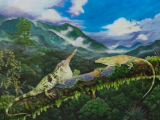 Commissioned painting of Anolis proboscis, adult male and female, with male displaying for the female in a courtship ritual.